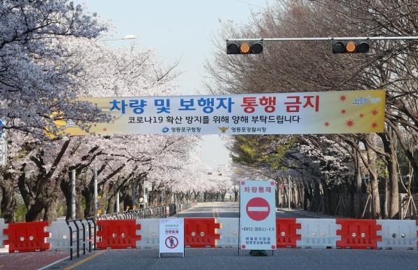 코로나19 영향으로 여의도 윤중로 벚꽃축제가 전면 취소된 6일 서울 여의도 윤중로 벚꽃길이 출입통제 되고 있다.